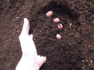 Buy Bulk Soil Online - Bulk Landscape Supplies