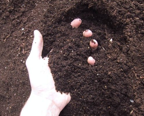 Buy Bulk Soil Online - Bulk Landscape Supplies - Hand In Rich Organic Soil