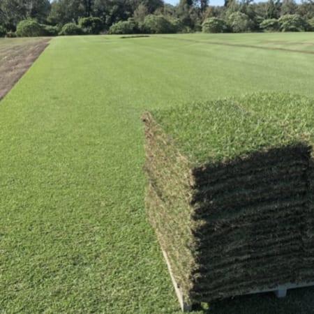 Empire Zoysia Turf Supplier Brisbane - Quality Grass