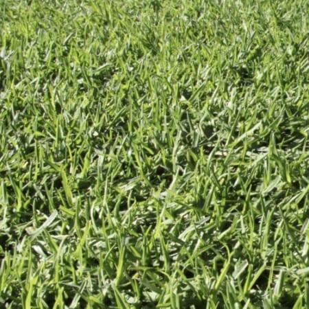 Kikuyu Turf Supplier Brisbane - Bulk Landscape Supplies Brisbane