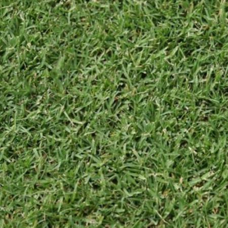 Winter Green Turf Brisbane - Bulk Turf Suppliers