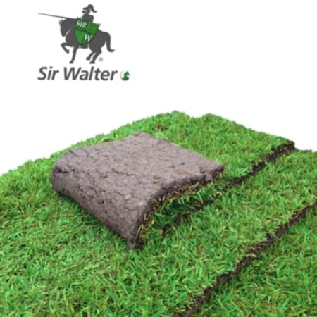 Sir Walter Turf Supplier Brisbane - Bulk Landscape Suppliers Brisbane